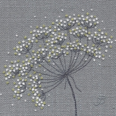 Cow Parsley 29