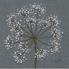 Cow Parsley 35
