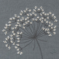 Cow Parsley 45