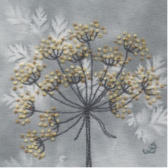 Cow Parsley 50
