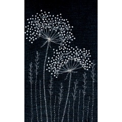 Cow Parsley- two heads