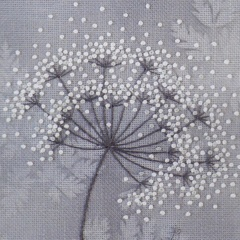 cow-parsley-01