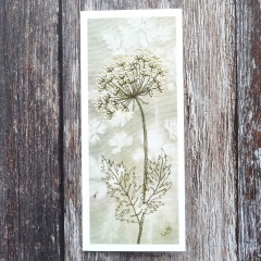 cow-parsley-kit