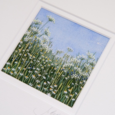 cow-parsley-meadow-cpm16-02