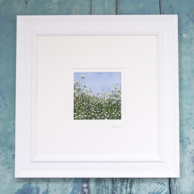 cow-parsley-meadow-cpm16-03